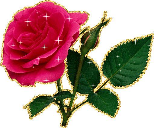 Гифка роза на прозрачном фоне