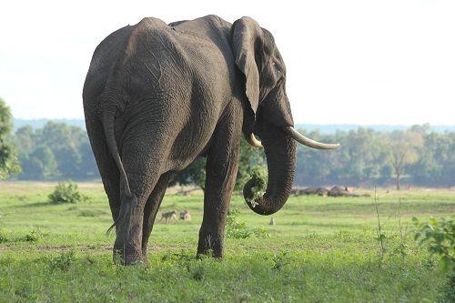 Should You Be Going on Safari in Zimbabwe?