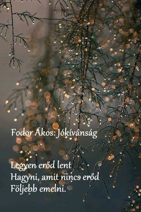Fodor Ákos #idézet | A kép forrása: Ibolya Fritz