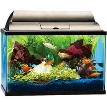 Walmart: Tetra Aquarium Starter Kit, 5 Gallons