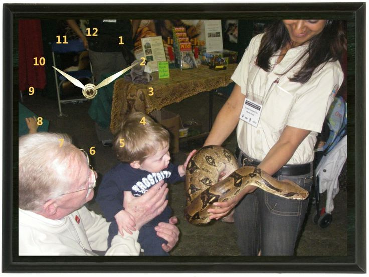This Big Snake Clock was taken the first time this little guy saw a snake. This snake was way bigger than him.