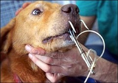 PETITION: We want the French, Mexican and United States Governments to stop anyone using puppies and kittens as shark and alligator bait. Together we WILL put an end to this!  http://www.causes.com/actions/1679274#comments: States Government, Puppies, Sharks Bait, Kittens, Living Dogs, French Islands, Sharkbait, United States, Animal