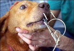 PETICIÓN: Queremos que los Gobiernos de Francia y Estados Unidos para detener cualquier persona que utilice los cachorros y gatitos como el tiburón y el cebo de cocodrilo. Juntos vamos a acabar con esto!