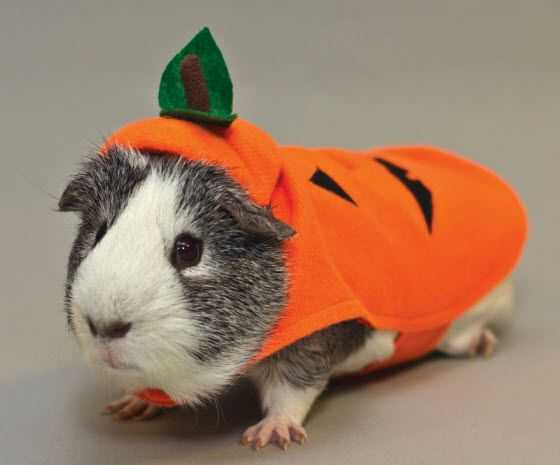 halloween dog costumes pictures