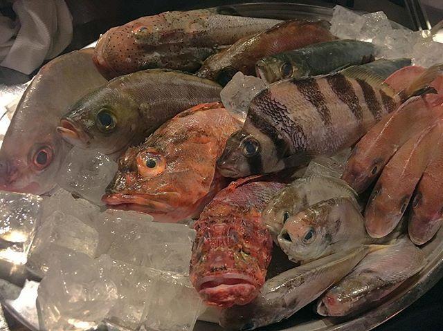 【早い者勝ち!!】 オーナーの知り合いの方から漁師直送の長崎県でとれたての 新鮮なお魚 や 珍しいお魚が  500円~ で取り揃えております!! 色々な調理法で召し上がっていただけます! 早い者勝ちです!! ぜひ寄ってってくださいね ♪  #炎lavita #炎LAVITA #イタリアン #イタリアン酒場 #炎ラビ #肉魚 #銘魚 #ピザ #魚 #魚介 #海鮮料理 #魚介料理 #ワイン #ボトルワイン #日本酒 #肉 #大阪 #裏天満 #天満 #天満駅 #居酒屋  #イタリア #ガストロ酒場ねぎま #火遊びまこ #FORNO 〒530-0033  大阪府大阪市北区池田町6-16 https://tabelog.com/osaka/A2701/A270103/27074454/
