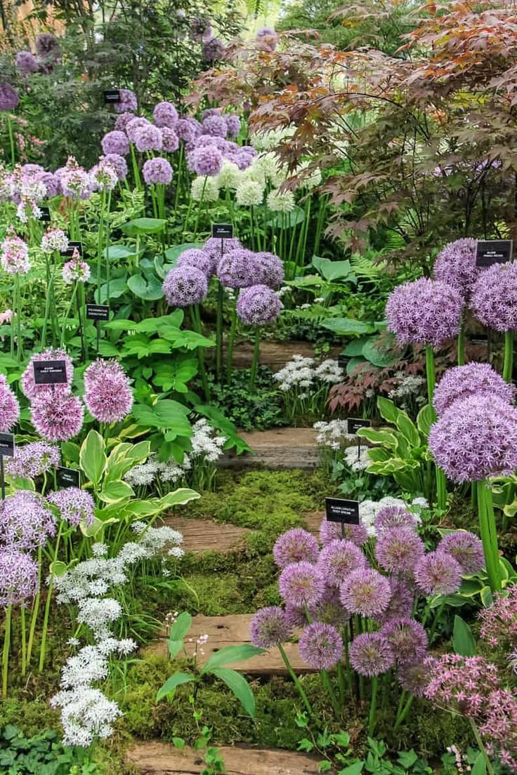 Spring Flower Combinations 8 Beautiful Shade Perennials