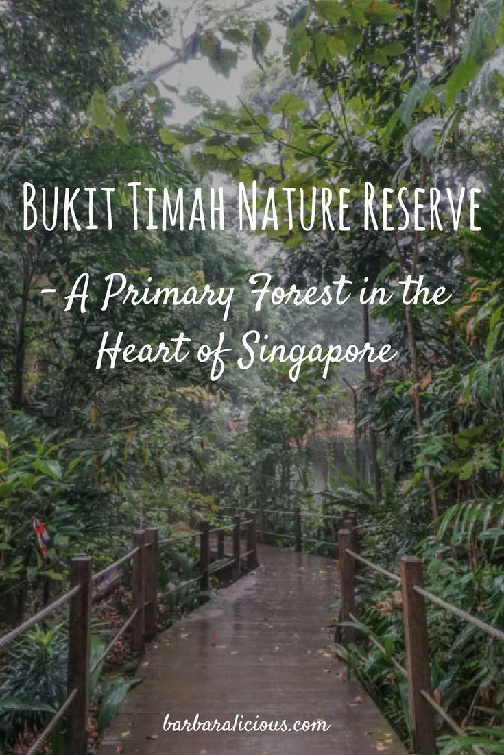 Only 12 Km From The Busy Center Of Singapore Is The Nature Reserve Bukit Timah That Was Founded In 1883 And With Images Singapore Travel Tips Singapore Travel Asia Travel