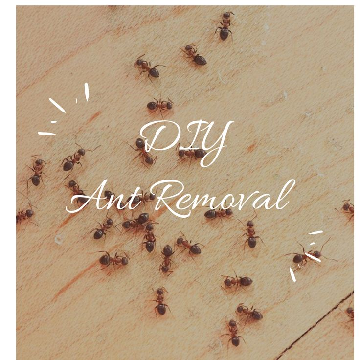 Natural Home and Garden Ant Removal Tips and Tricks #AntRemoval #Home #Garden