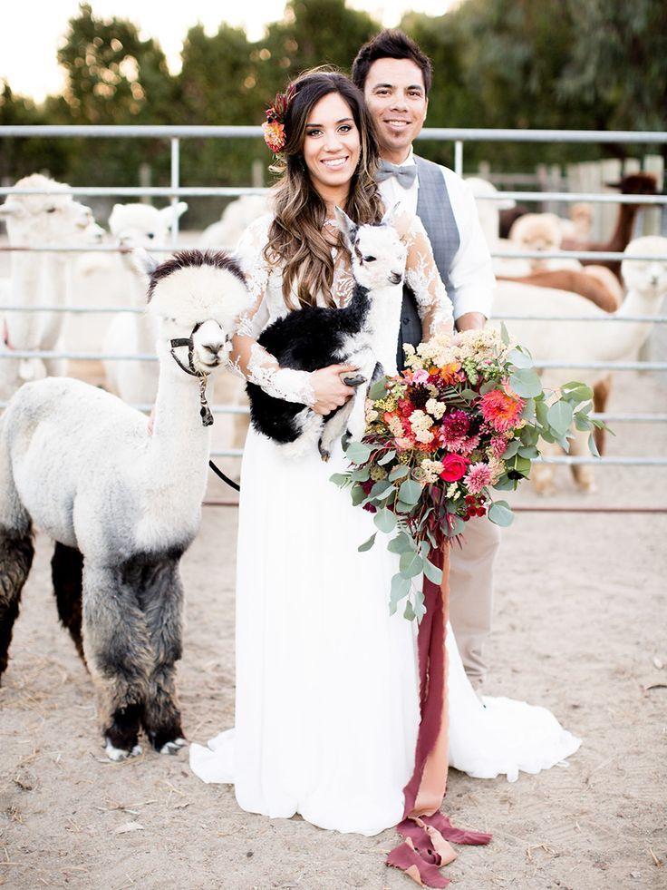 Heiraten Mit Alpakas Jandobrindt Com