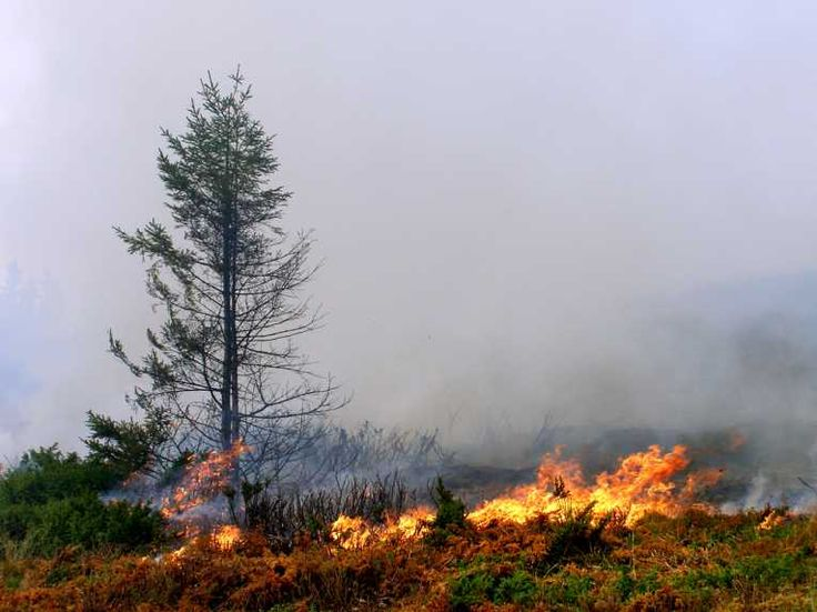 Changing climate alters wildfire risks, says study