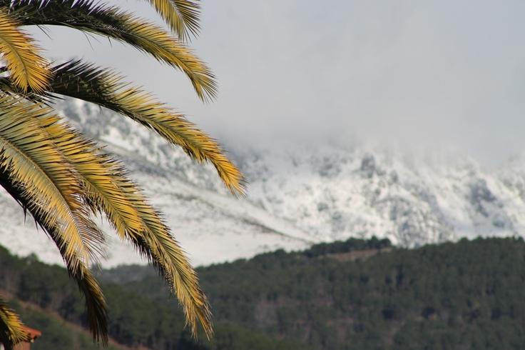 Contrastes de 'palmeras' y Gredos con nieve ; desde Candeleda  www.lunacandeleda.com