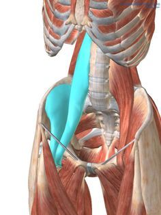 """Psoas, please release me… Let me go! 