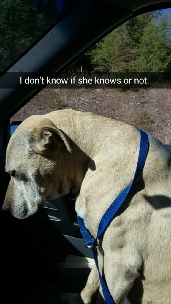 Mulher registra o último- e melhor- dia de vida de sua cachorra em sequência de…