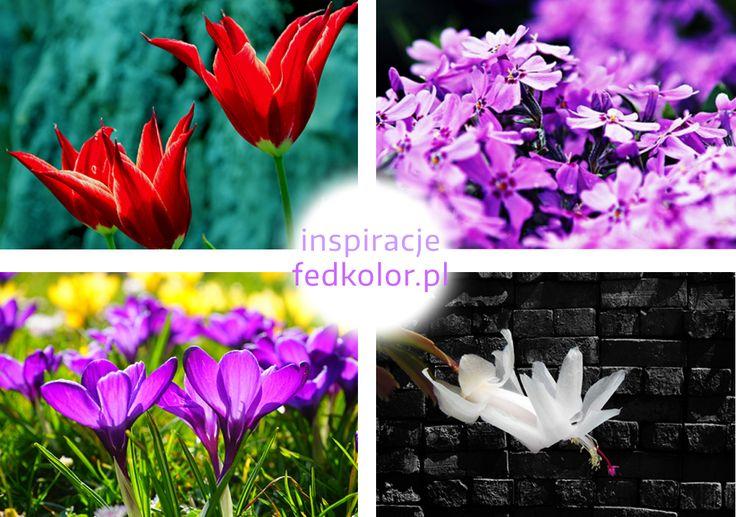 Nie możemy doczekać się wiosny ! 🌷 🌷 Z tego powodu przygotowaliśmy dla Was wiosenne, kwiatowe inspiracje :) Takie  #obrazy na płótnie możecie zamówić na stronie www.fedkolor.pl
