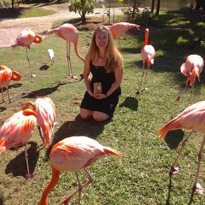 Sarasota Jungle Gardens   Riveted Roost Blog