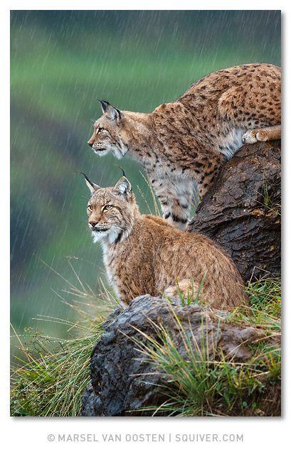 Spain Wildlife Endangered Species about to extinct