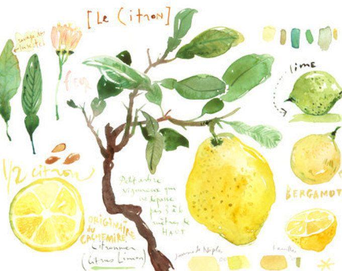 Zitrone Print, Küche Kunst, Zitrone Baum Aquarell, Botanischen Posteru2026