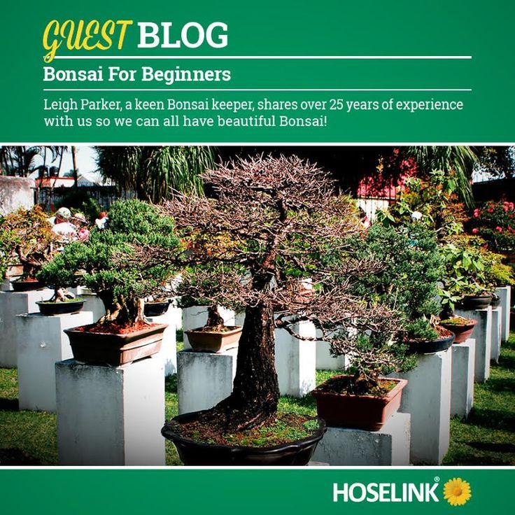 Bonsai For Beginners - Gardening