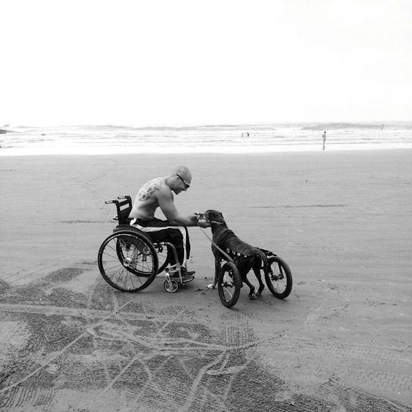 insolite chien fauteuil handicap homme plage roulant