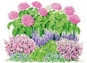 Pour un massif aux teintes harmonieuses, jouer sur les camaïeux de rose de l'hortensia YOU&ME® Together : 3 pieds accompagnés de 5 gauras 'Passionate Blush' en premier plan. Les épis érigés, lavande foncé, de 5 plants de veronica spicata 'Royal Candle Glory' s'accorderont quant à eux parfaitement avec la teinte bleutée de 3 plants de vinca 'Wojo's Gem' au feuillage original panaché de jaune