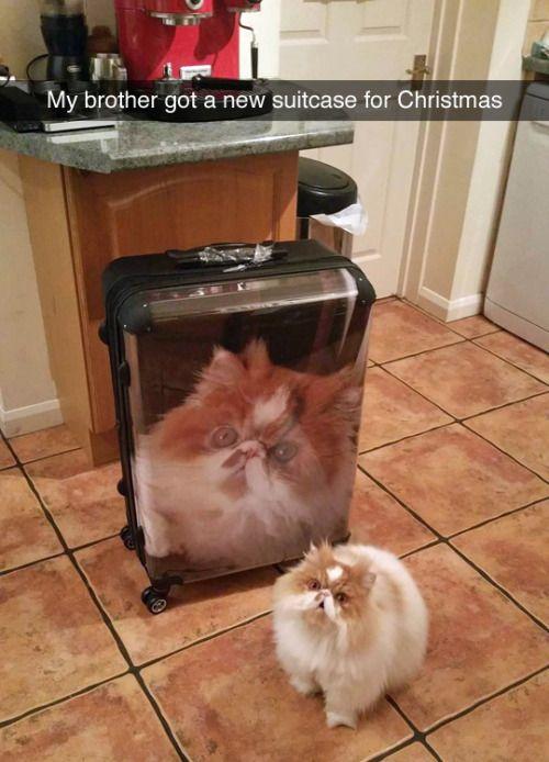 I've never seen a cat so proud.