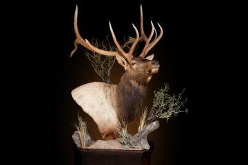 Elk mount fireplace - photo#39