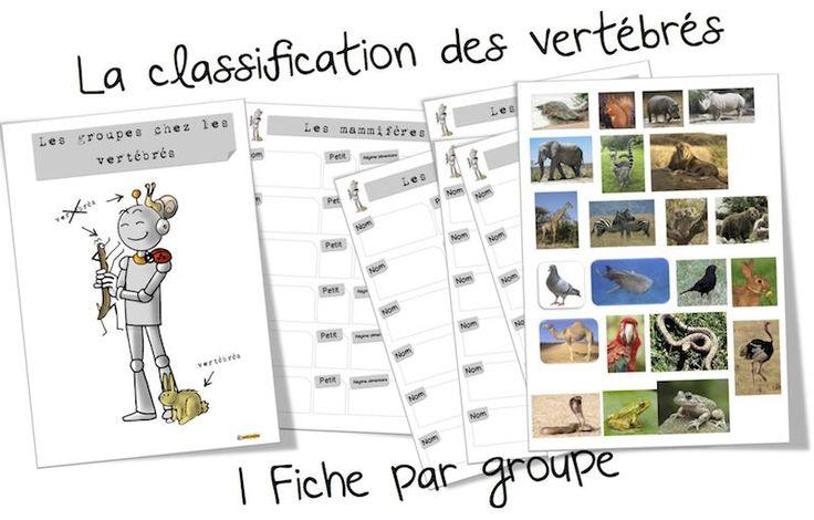 Sciences : La classification des vertébrés