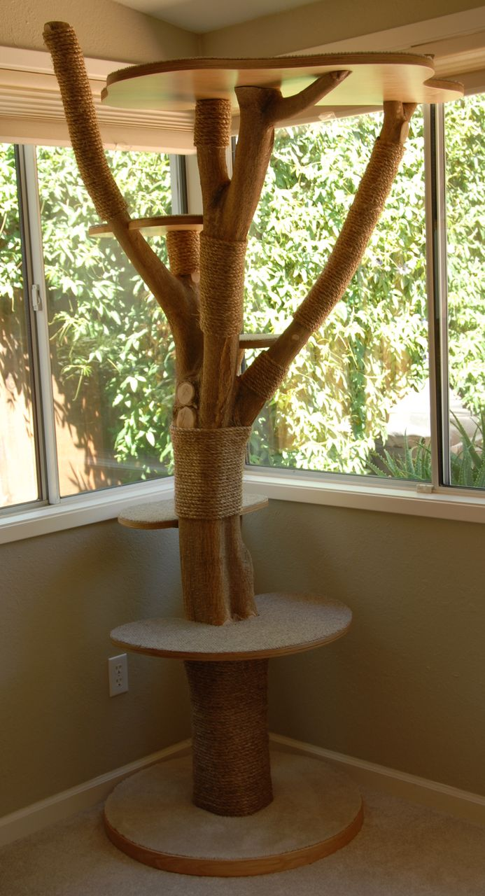 A cat tree built with a donor tree from my front yard