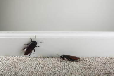 Get Rid of Roaches Naturally Homemade Roach Killer.By Erin Huffstetler, Frugal Living Expert. - Its either them or us & I foot the bills around here, freakin' hot weather!!!