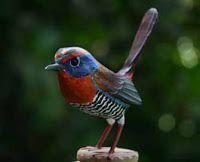 Las  Aves  que Viven  en  Chile: CHUCAO