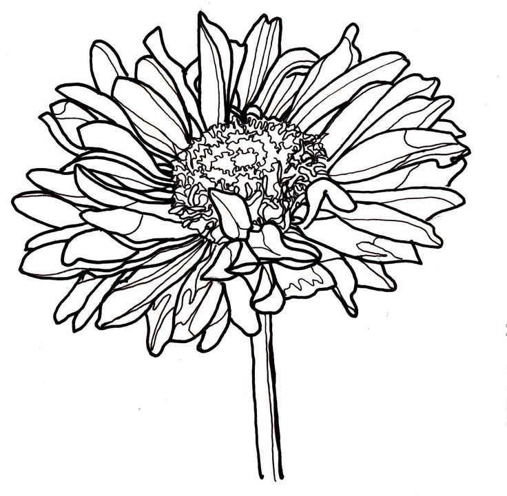 Flower In Line Drawing : Best flower drawings images on pinterest