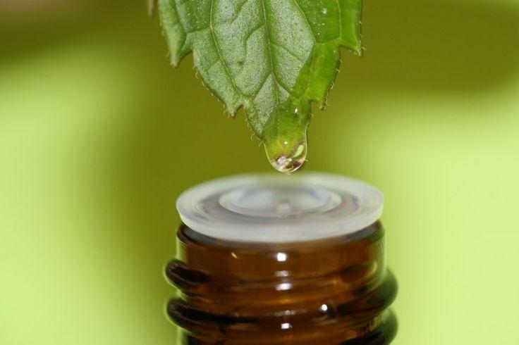 A teafaolaj 8 felhasználási módja, hogy meggyógyítsd a bőröd hibáit és betegségeit - Nyugdíjasok
