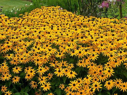 17 low maintenance perennial flowers for the garden