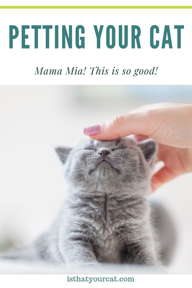 Be An Expert At Petting Your Cat The Right Way Pets Cat Massage Cats