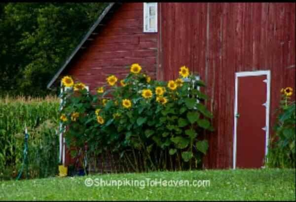 15 Best Images About My Barn On Pinterest Red Barns