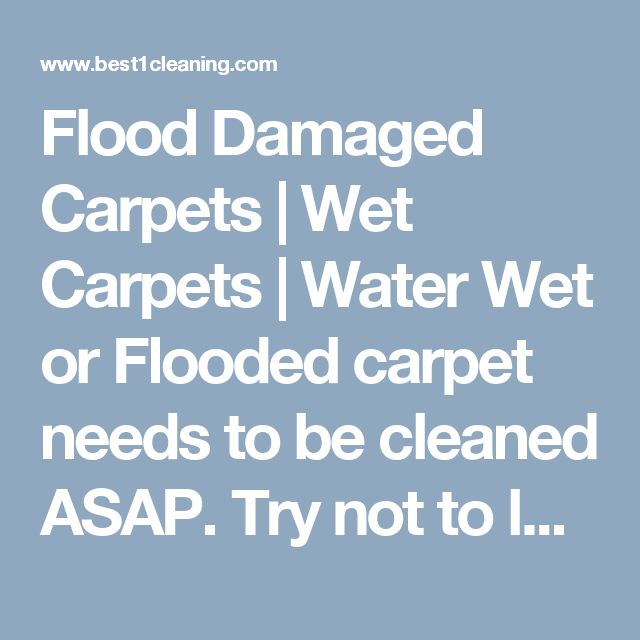 Flood Damaged Carpets | Wet Carpets | Water Wet or Flooded carpet needs to be cleaned ASAP.  Try not to let it dry out, you maybe left with water marks on your carpet for life. Mold and bacteria will grow fast and will become a major problem if not treated fast. #wetcarpet #moldincarpet #brisbanemoldcarpetcleaning #waterincarpetbrisbane Extraction