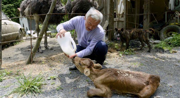 Este hombre arriesga su vida para cuidar animales abandonados tras el accidente de Fukushima
