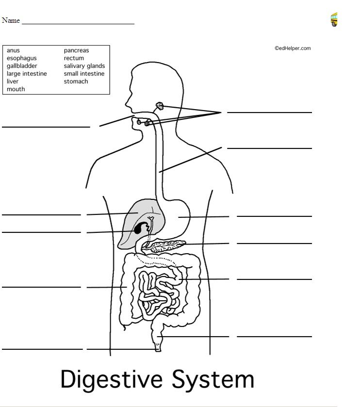 F D Cf E Bd F C Human Digestive System Health Images on Urinary System Labeling Worksheet