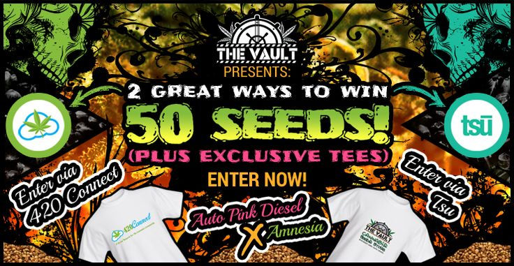 Win 50 seeds and 2 free T Shirts - http://www.cannabis-seeds-store.co.uk/Cannabis-Seeds-News/double-impact-2-great-ways-to-win-50-seeds-with-the-vault