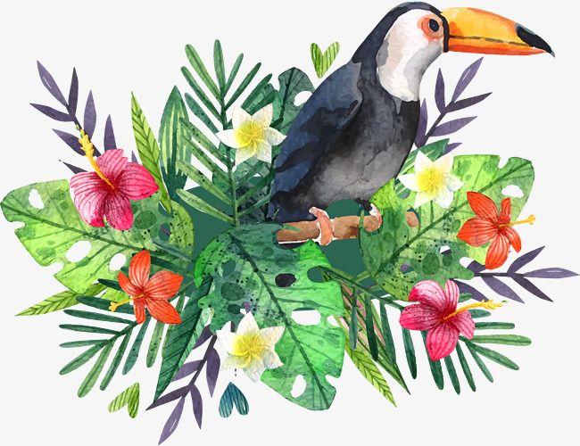 Cartaz De Passaro Grande Aquarela De Pintados A Mao Clipart De Tucano Material De Vetor Tucano Imagem Png E Psd Para Download Gratuito Bird Poster Bird Watercolor