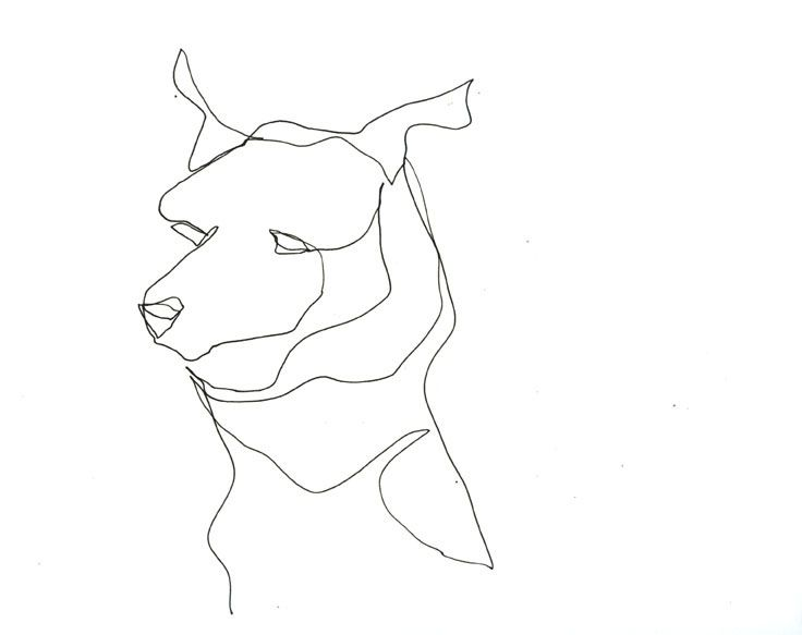 Contour Line Drawing Of A Dog : Best my continuous line drawings images on pinterest