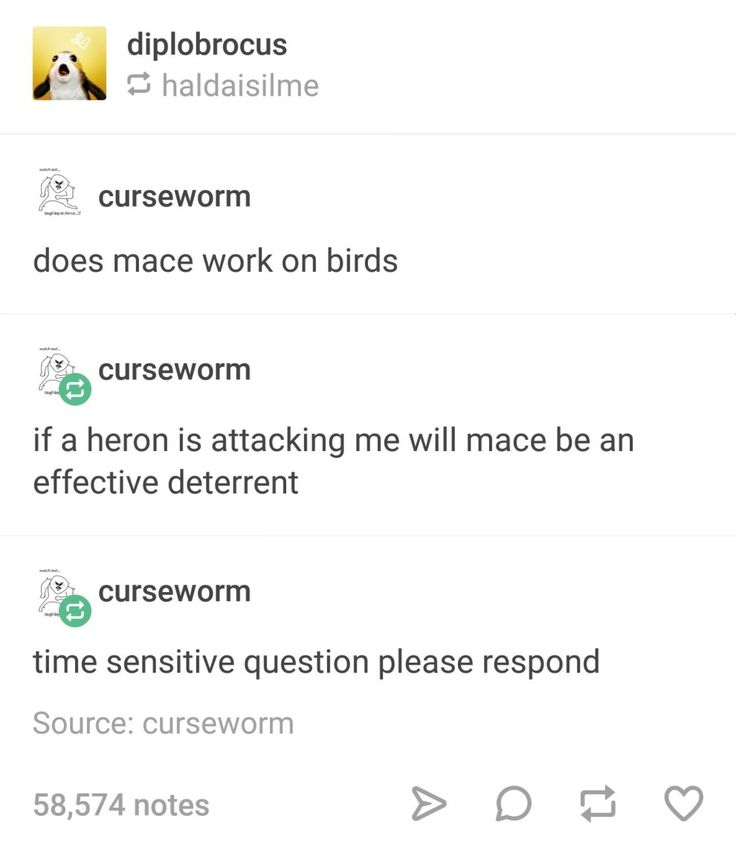 Bored on the internet? Here's a LOT of funny Tumblr posts.