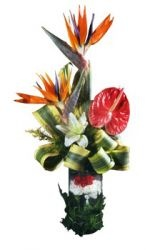 Exclusive exotic glass vase arrangement of fresh imported bird of paradise, red anthurium, whitasiatic lily along with red and white carnation.