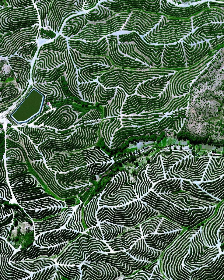 Fruit trees swirl on the hills of Huelva, Spain. The climate here is ideal for this growth with an average temperature of 17.8° C (64° F) and a relative humidity between 60% and 80%. /// Source imagery: @digitalglobe