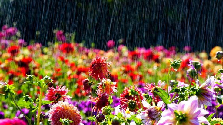 Spring Rain Wallpaper High Definition