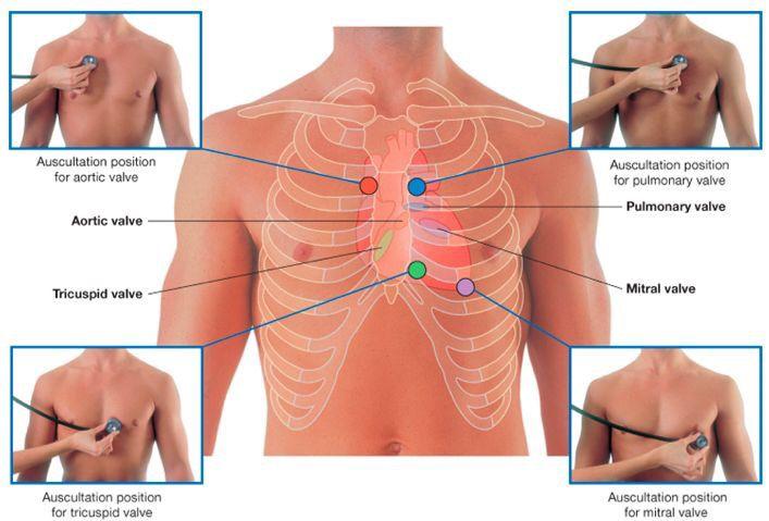 57 best Medizin images on Pinterest   Krankenpflegeschule, Medizin ...