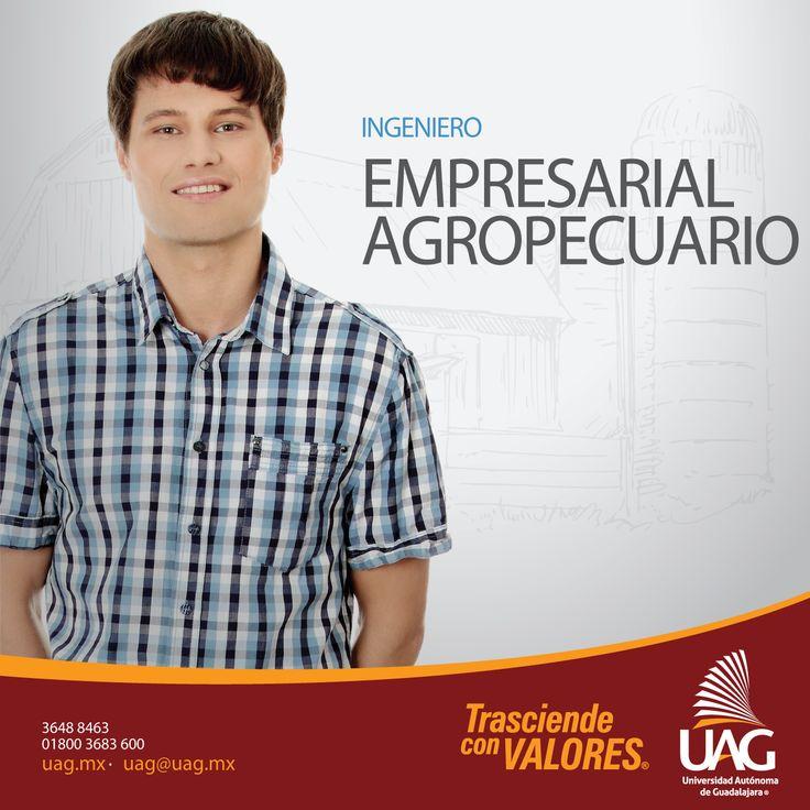 El Ingeniero Empresarial Agropecuario de la #UAG es un profesional con conocimientos, habilidades, competencias y valores para producir, organizar, transformar, administrar y comercializar los diferentes procesos y productos de las actividades agrícola y pecuaria.