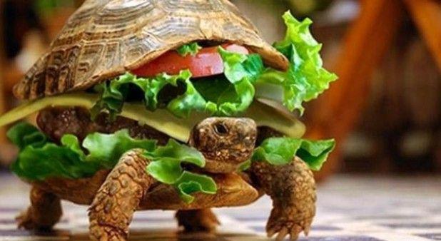 Hombre esconde a su tortuga en una hamburguesa para poder llevarla en el avión