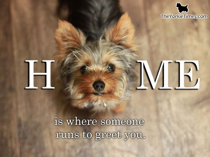 I know this feeling every, single day!!! Super Grateful! I <3 my Yorkie!
