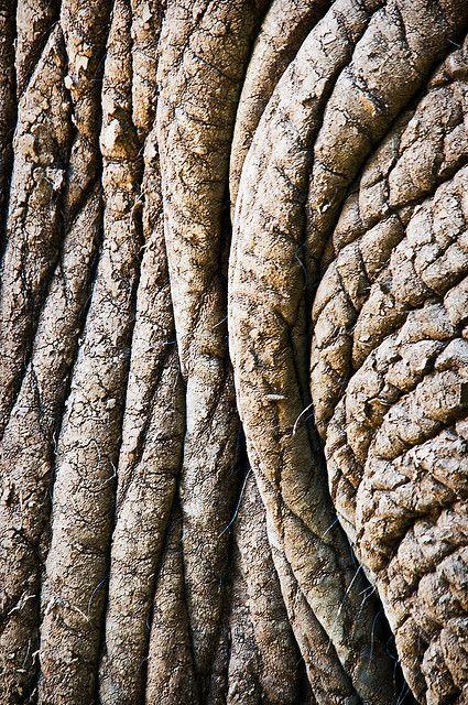 Elephant skin | 138/365 - Elephant skin texture - May18 | Flickr - Photo Sharing!